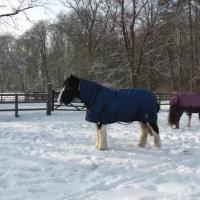 Snow Feb 2012